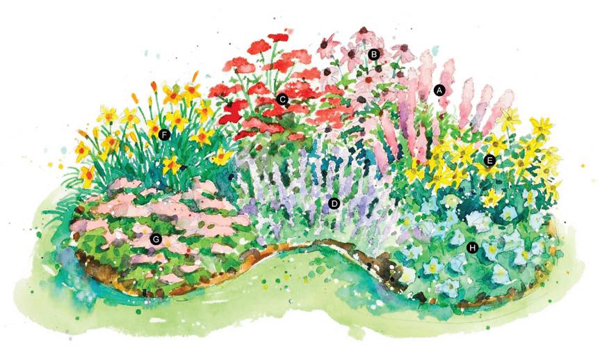 Схемы цветочных клумб (2)