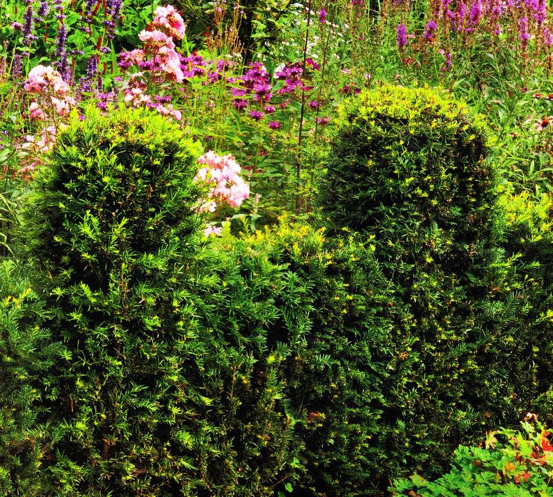 кустарники и их знакомые