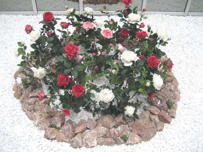 путешественников клумбы с розами оформление фото еще одним